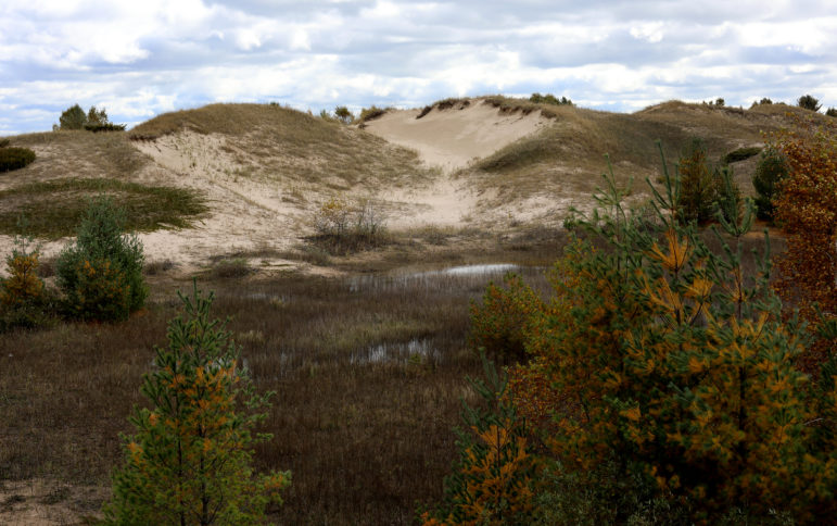 Sand dunes are seen at Kohler-Andrae State Park near Sheboygan, Wis. The habitat was created over thousands of years, continually shifting with the wind. The dunes are held together without soil by roots, supporting several threatened species of plants and insects. Photo by Coburn Dukehart / Wisconsin Center for Investigative Journalism.