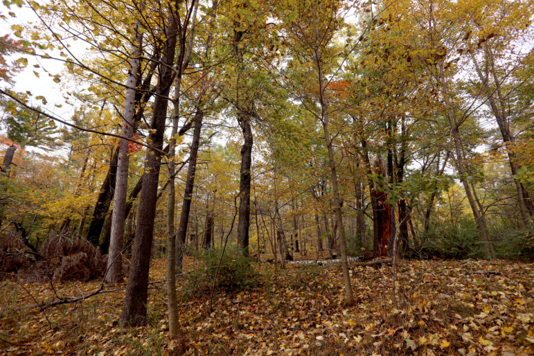 A wooded area is seen near the boundary between Wisconsin's Kohler-Andrae State Park and land owned by the Kohler Co. The company is proposing to build an 18-hole golf course on the site. Photo by Coburn Dukehart/Wisconsin Center for Investigative Journalism.