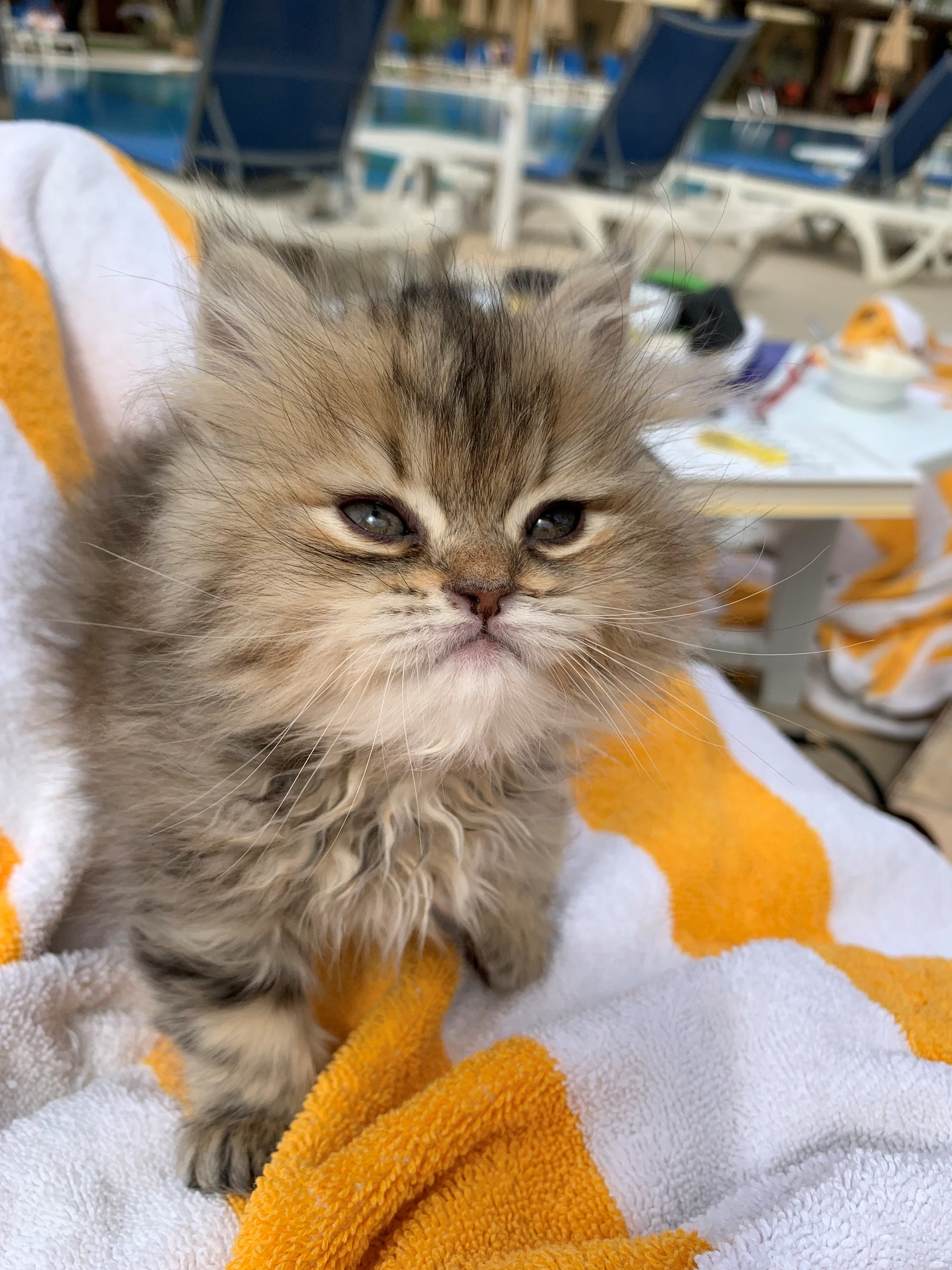Sip & Purr Cat Café Rescues Homeless Kitten in Cairo, Egypt