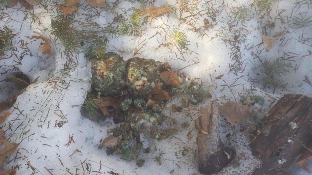 The DNR says it appears poison that has been balled up within ground meat was intentionally left to harm wildlife. Photo courtesy of the Wisconsin DNR.