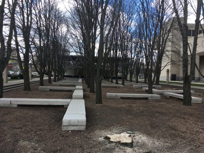 Marcus Center Trees Removed Before Permit Issued