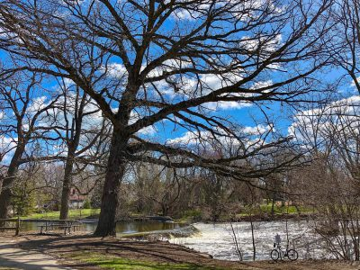 Op Ed: Save the Kletzsch Park Trees!
