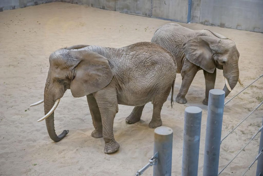 Ruth, left, and Brittany, right, in the new Elephant Care Center Recreation Room at the Milwaukee County Zoo. Photo from the Milwaukee County Zoo.