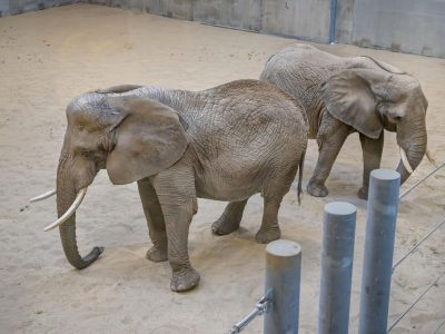 Zoo Opening New Elephant Exhibit