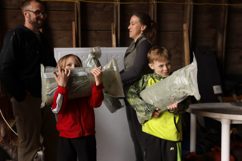 Ari Testaberg, 6, left, and Aki Testaberg, 8, show frozen hemp that was harvested last season and is now being stored in a freezer at their parents' hemp farm in River Falls, Wis., on April 18. In the Testabergs' 1,000-square-foot processing facility, they can process 300 acres of hemp from their own land, as well as hemp grown by other farmers. Photo by Emily Hamer / Wisconsin Center for Investigative Journalism.