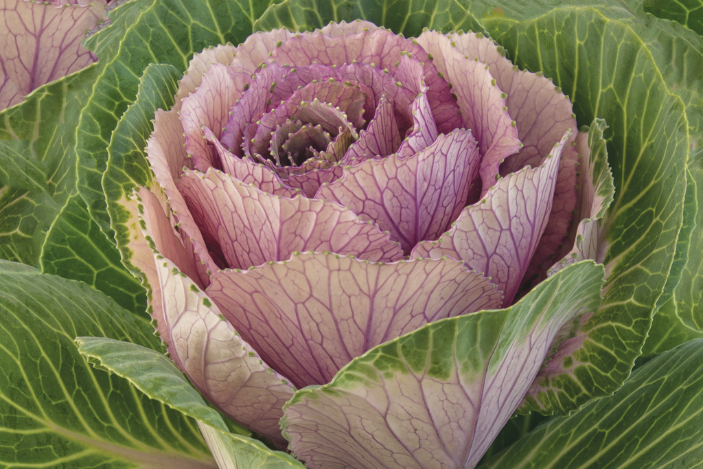 Phyllis Bankier, featured artist for the 50th Starving Artists' Show on Sept. 8, highlights the unique details in flowers through her stunning photography.