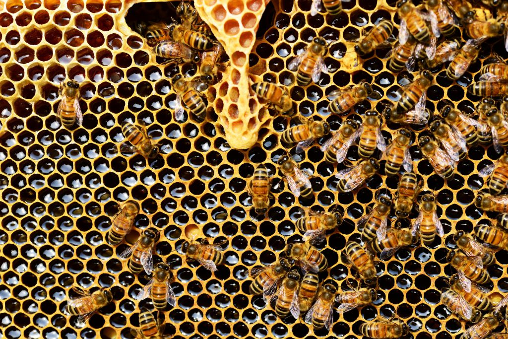 Honeycomb. Photo from Pixabay.
