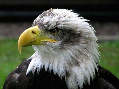 Op Ed: Endangered Species Act in Danger
