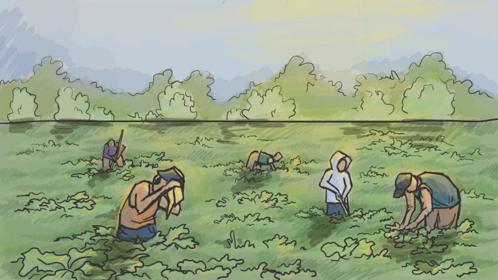 """""""Sometimes the manager was angry and didn't give us water. (We) told him that there was no water — it seemed intentional,"""" said """"Roberto,"""" an immigrant farm worker describing working conditions at a farm in Wisconsin. Roberto and 13 others were allegedly forced to work illegally at the farm. Illustration by Emily Shullaw for Wisconsin Watch."""