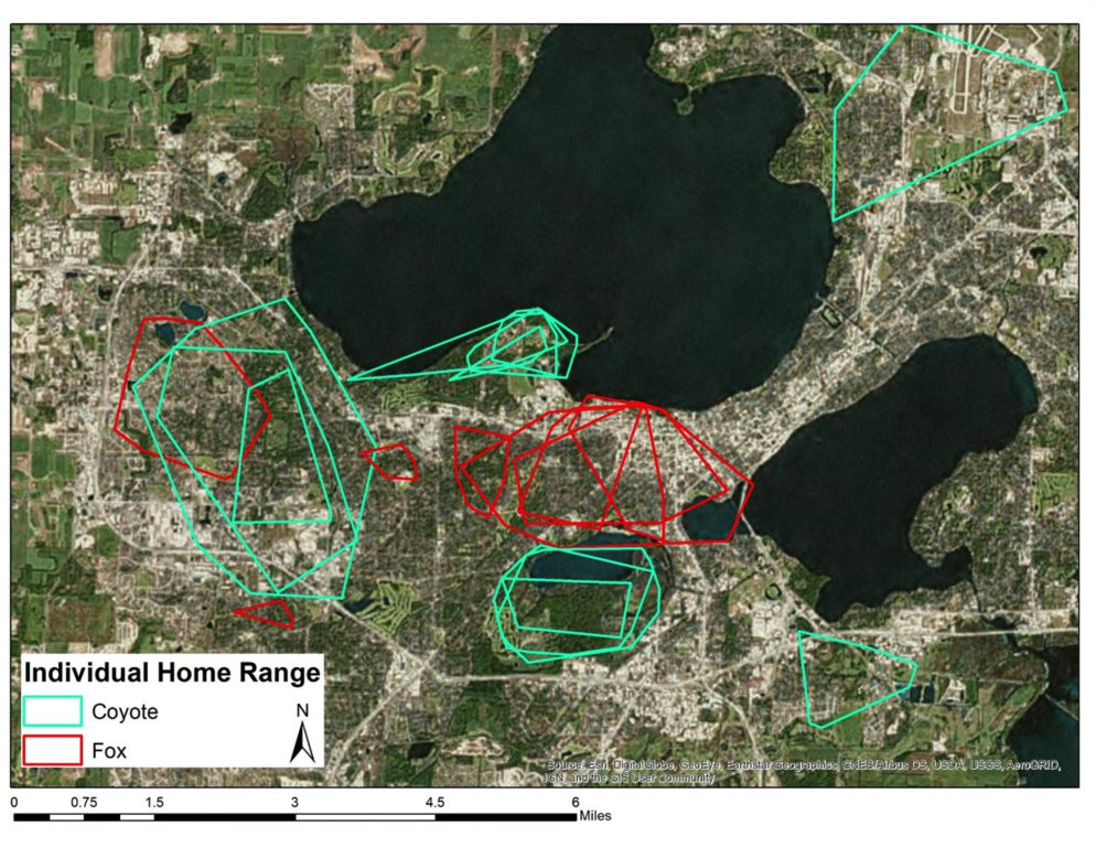 Map by David Drake/UW-Madison Urban Canid Project.
