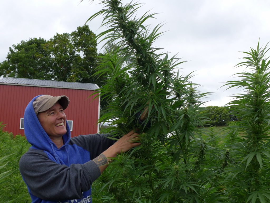 FL Morris examining hemp plants. Photo by Hope Kirwan/WPR.