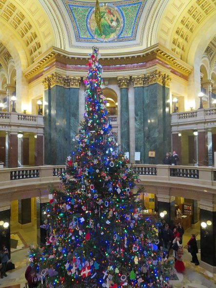 Wisconsin Capitol tree in 2014. Photo by Corey Coyle [CC BY 3.0 (https://creativecommons.org/licenses/by/3.0)].