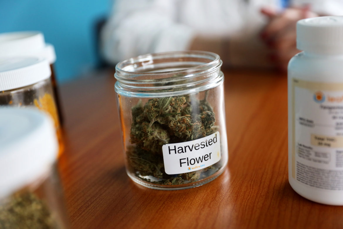 Harvested cannabis flower is seen at LeafLine Labs in Cottage Grove, Minn., on April 18. The 42,000-square-foot indoor cultivation and production facility is used to grow marijuana for medical uses and create pharmaceutical cannabis products. Medical marijuana is legal in 33 states, including Minnesota, but not in Wisconsin. A bipartisan group of lawmakers has proposed legalizing marijuana for medical uses in Wisconsin. Photo by Emily Hamer/Wisconsin Watch.