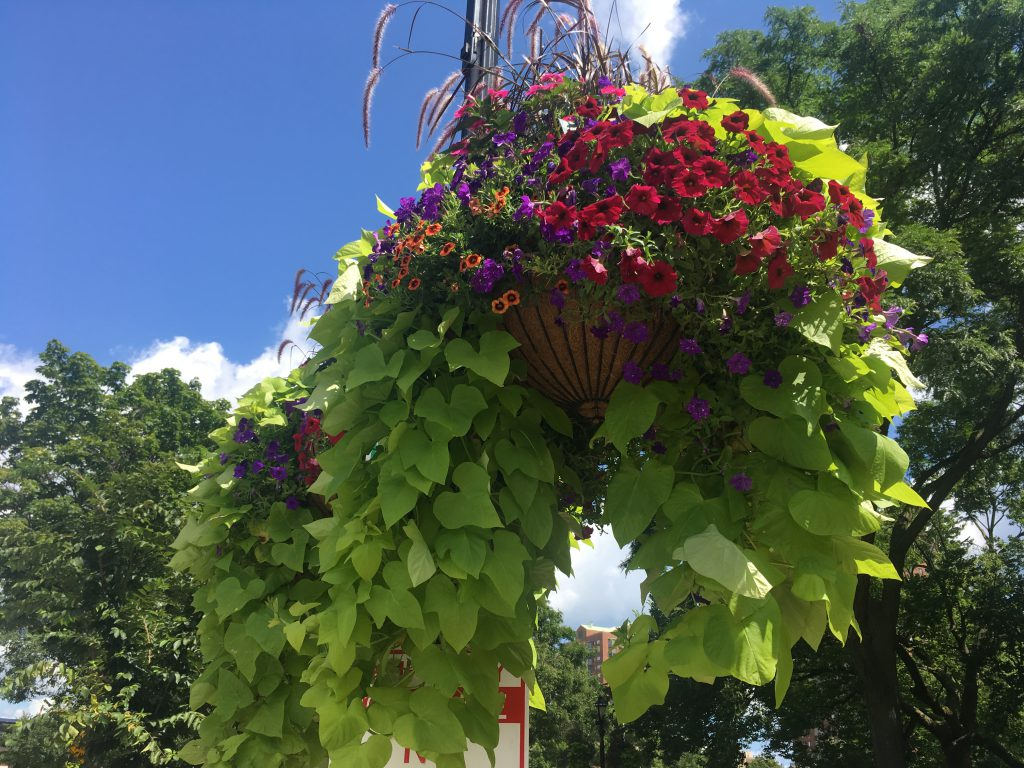 Hanging flower baskets in Cathedral Square. Photo courtesy of Cathedral Square Friends, Inc.