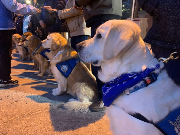 "Lutheran Church Charities provides crisis and disaster response to communities in crisis. Part of that response is comfort dog ministry. During the vigil Sunday, March 1, 2020, to honor the victims of the deadly shooting at the Molson Coors brewery complex Wednesday, Feb. 26, 2020, golden retrievers were lined up with vests on that said ""please pet me."" Photo by Alana Watson/WPR."