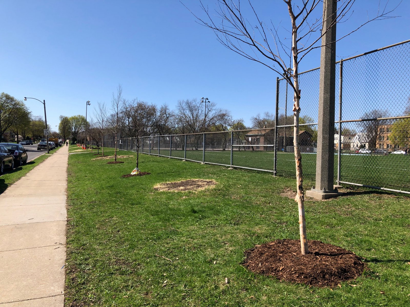 Replacement trees at Ohio Playfield for those lost to emerald ash border. Photo by Jeramey Jannene.