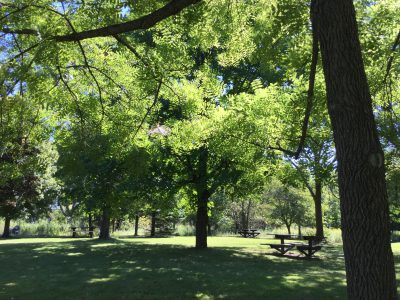 Milwaukee Walks: A Forest in a City