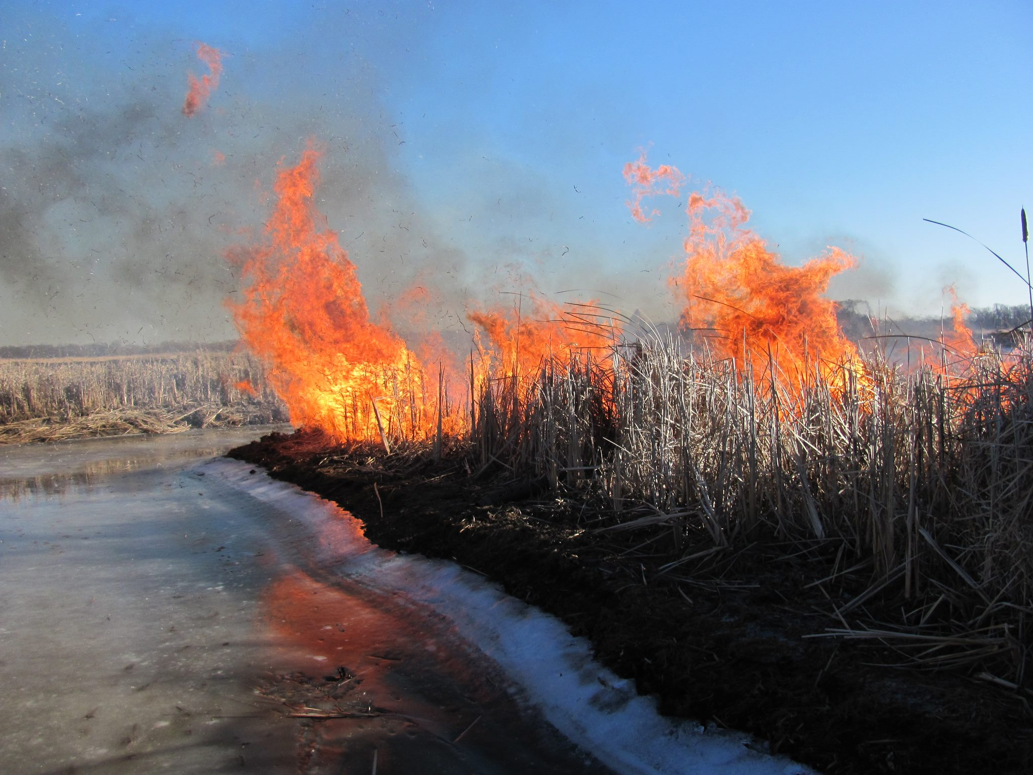 Prescribed burn at Uihlein Waterfowl Production Area. Photo by Sean Sallmann/USFWS. (CC BY 2.0) https://creativecommons.org/licenses/by/2.0/