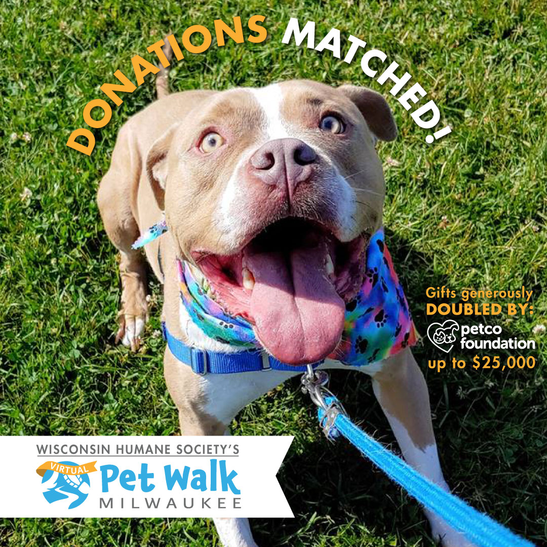 Petco Foundation to Match All Donations up to $25,000 to Wisconsin Humane Society's Virtual Pet Walk