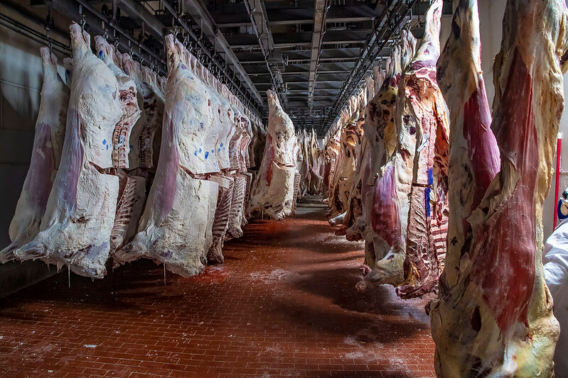 Beef carcasses at a meat processing plant. Photo by Preston Keres/USDA. (Public Domain).
