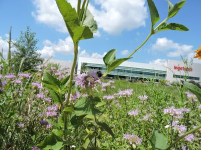 Menomonee Valley Partners, Urban Ecology Center Complete Transformation of 24-Acre Brownfield