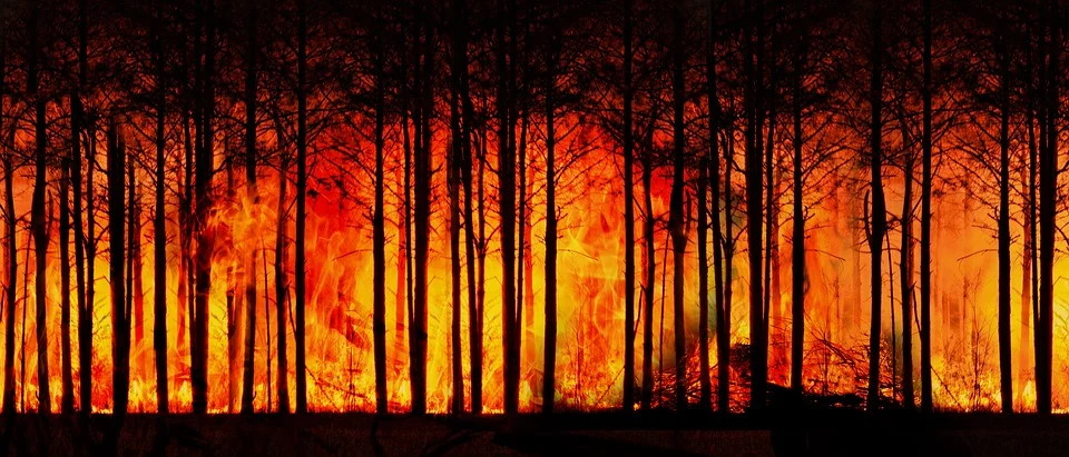 Forest fire. Pixabay License Free for commercial use No attribution required