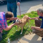 Local Hero Nabs PETA Award for Saving Dog From House Fire