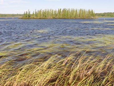 Though Many Waters Below Long-Term Average, Some Good Signs For Wild Rice In 2020