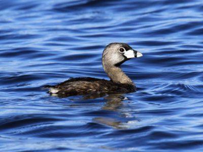 58% of Key Great Lakes Wetlands Unprotected