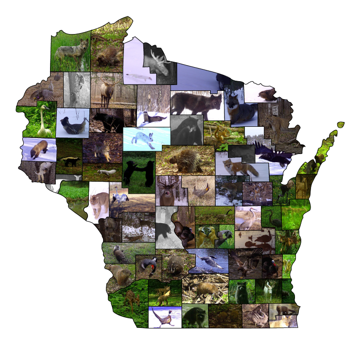 Some of Snapshot Wisconsin's favorite photos from the first 50 million collected. / Photo Credit: Wisconsin DNR