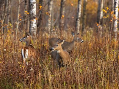 DNR Hunt Wild Wisconsin Mobile App Loaded With New Features For Fall 2020