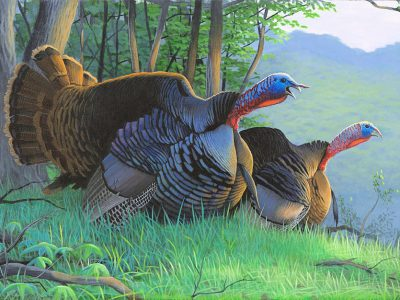 Wisconsin Waterfowl, Turkey And Pheasant Stamp Funding Project Applications Due Feb. 5