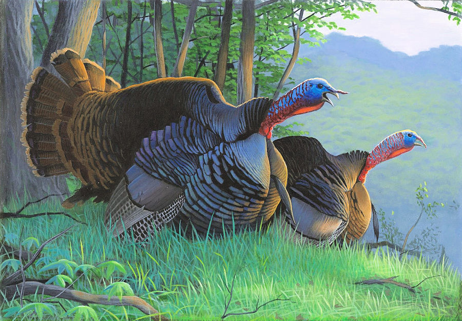 The 2021 Wild Turkey Stamp was designed by Caleb Metrich, of Lake Tomahawk, who won this year's turkey stamp design competition. / Photo Credit: Caleb Metrich/Wisconsin DNR