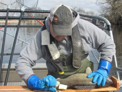Wisconsin Walleye Management Plan Virtual Meeting Dec. 15