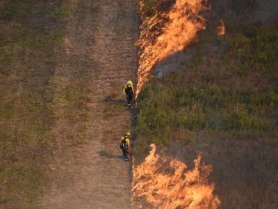 Prescribed Burns Spark A Better Future For Rare Ecosystems