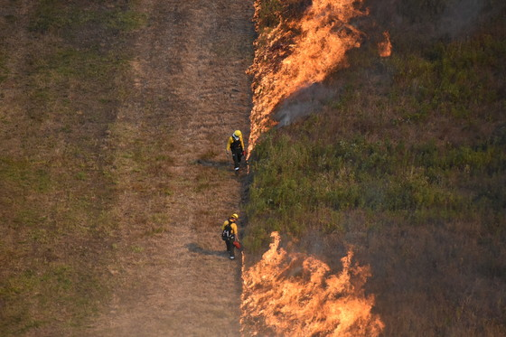 Prescribed Burns Spark A Better Future For Rare Ecosystems