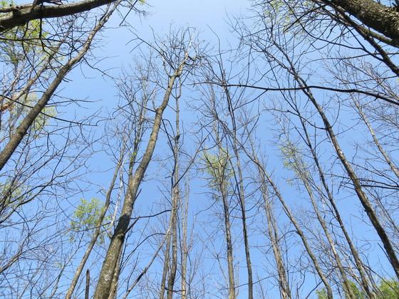 DNR Announces Temporary Trail Closures At Potawatomi State Park