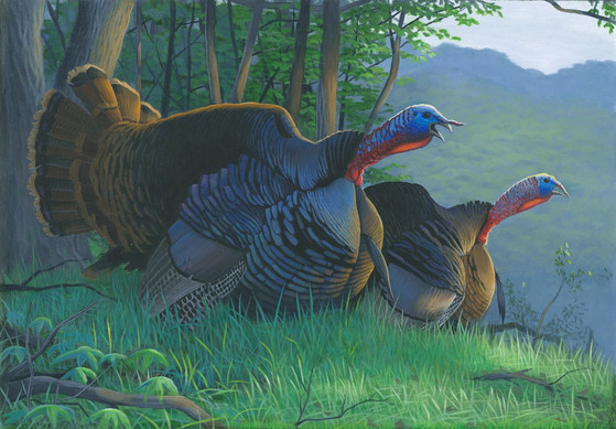 Winning artwork for the 2021 wild turkey stamp, by Caleb Metrich of Lake Tomahawk, Wisconsin. / Photo Credit: Wisconsin DNR