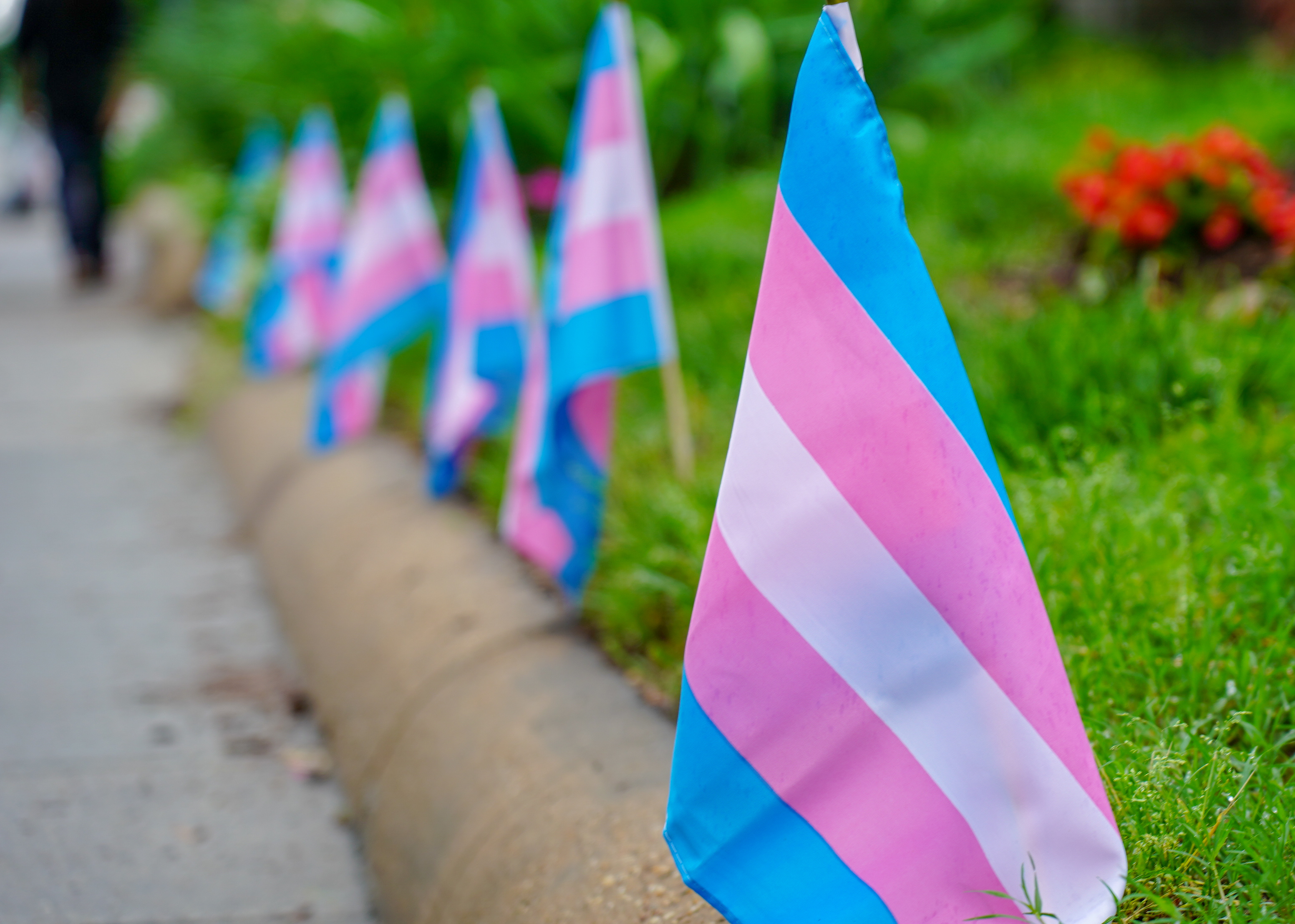 Transgender flags. Photo by Ted Eytan. (CC BY-SA 2.0) https://www.flickr.com/photos/taedc/41508984684/ https://creativecommons.org/licenses/by-sa/2.0/