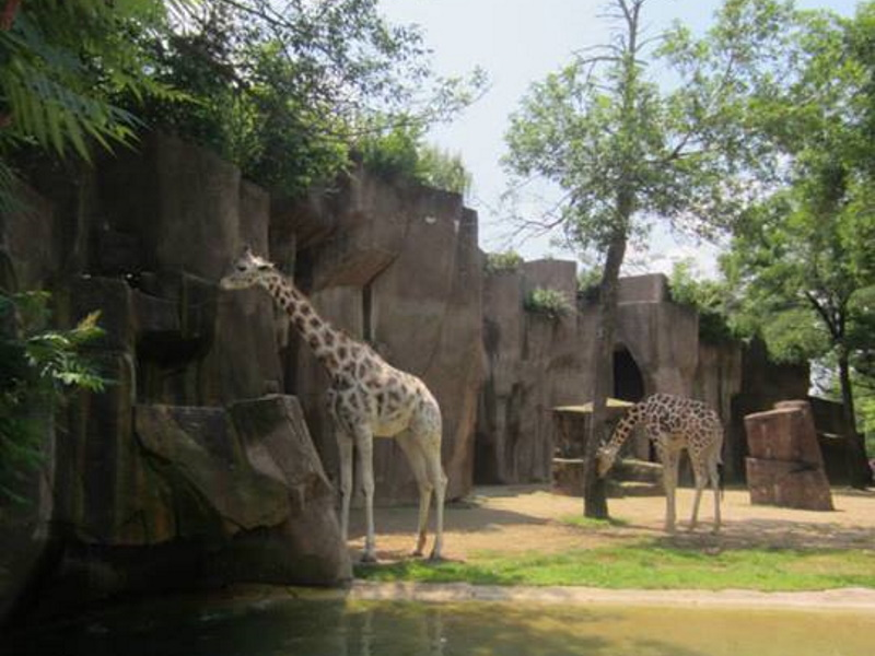 Giraffes at the Milwaukee County Zoo. Photo by Alison Peterson.