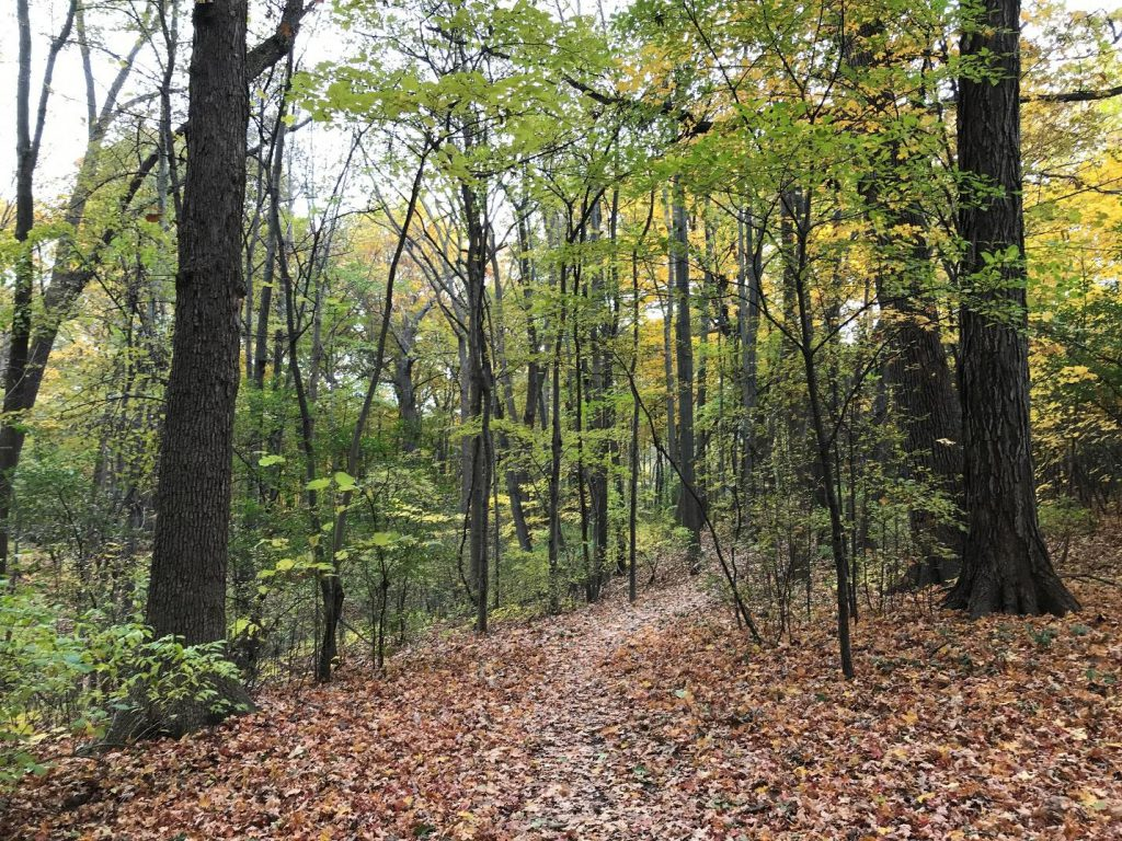 Sanctuary Woods in County Grounds Park, Wauwatosa. Photo by Charlie Mitchell.