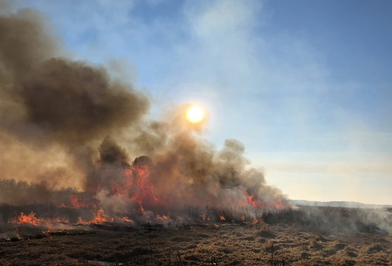 Every year, the DNR conducts winter burns across Wisconsin, primarily in wet prairies and wetlands such as cattail marshes, to reduce the potential for wildfires and provide other benefits. / Photo Credit: Wisconsin DNR