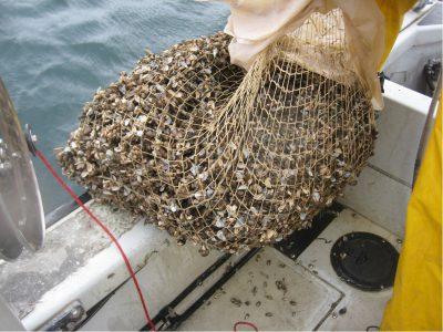 Murphy's Law: Quagga Mussels Still Rule Lake Michigan