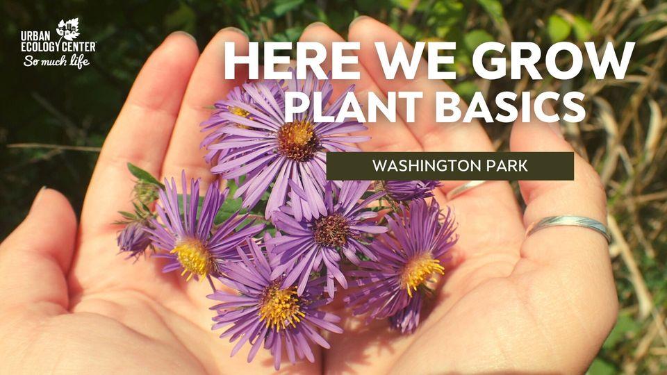 Here We Grow – Plant Basics