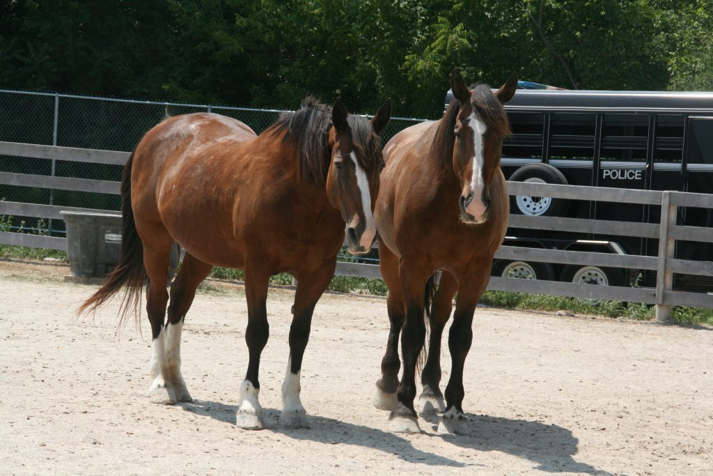 Police horses at MKE Urban Stables. Photo by Jeramey Jannene.