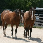 Plenty of Horne: MKE Urban Stables Is First of Its Kind