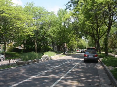 Murphy's Law: City's Urban Forest Fights Climate Change