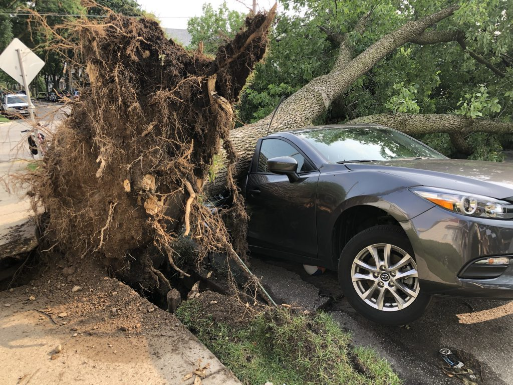 A tree fell atop a car on S. 14th St. during a storm on August 10. Photo by Jeramey Jannene.
