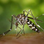 Good Bad News, Mosquito Numbers Down