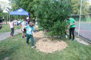 Students from Tamarack Waldorf School distribute mulch around a peace tree at Pulaski Playfield. Photo by Jeramey Jannene.
